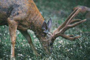 antlers-1850103