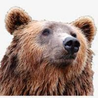 bear in ranthambore